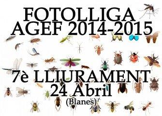 """7è Lliurament FotoLliga """"Insectes"""""""