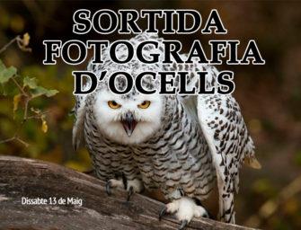 Sortida Fotogràfica d'Ocells